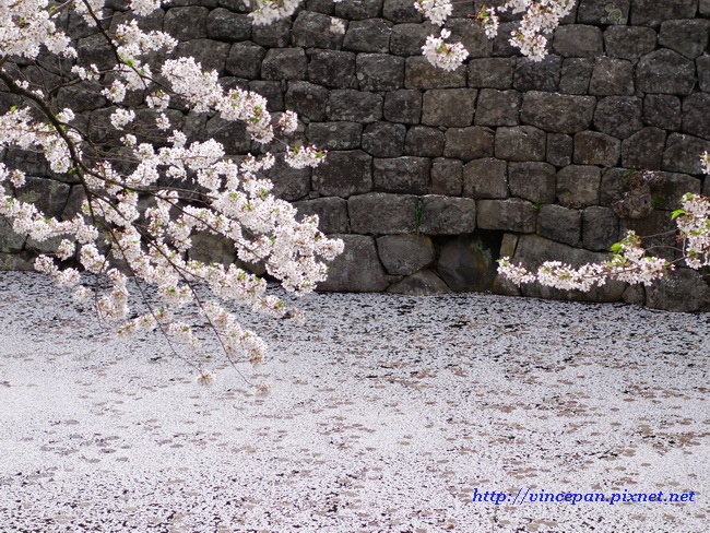 內濠櫻花絨毯2