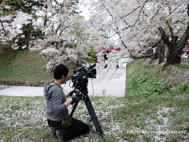 下乘橋櫻花絨毯NHK