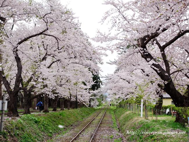櫻花 鐵道1