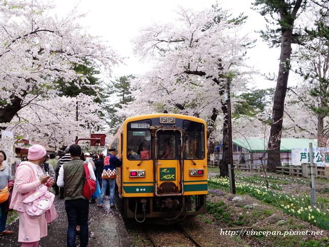 櫻花 火車1