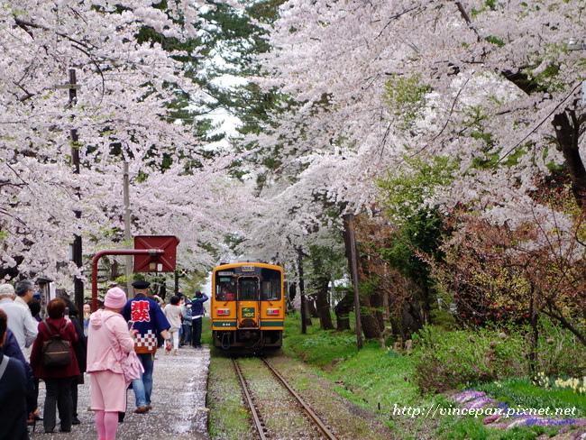 櫻花 火車2