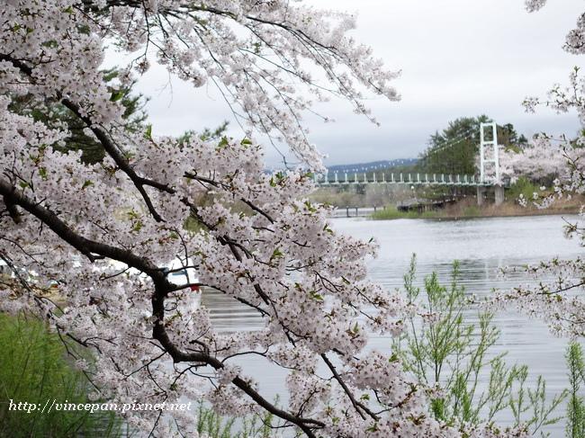 芦野公園 吊橋