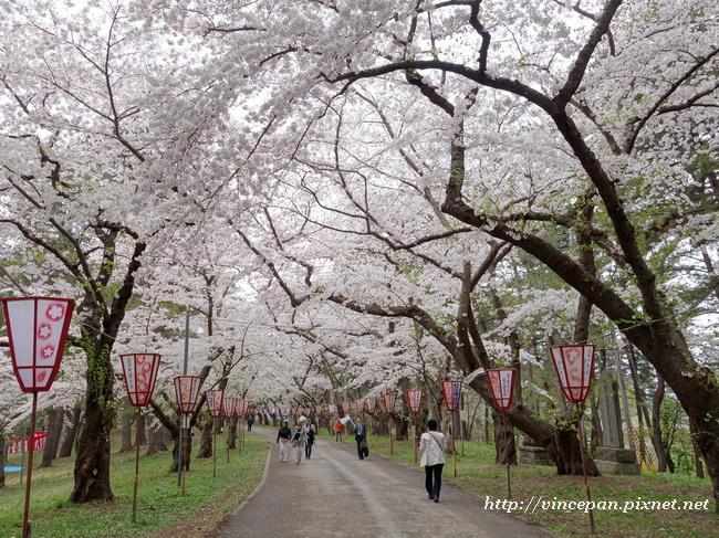 芦野公園櫻花隧道1