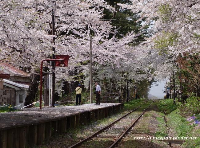 櫻花 鐵道4