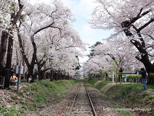 芦野公園站 櫻花鐵道