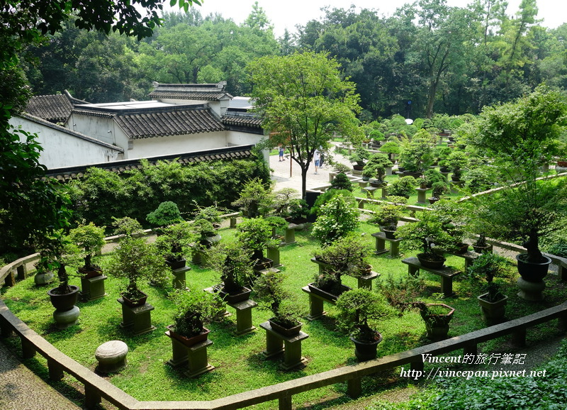 萬景山莊 盆栽