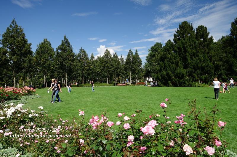 玫瑰花園1