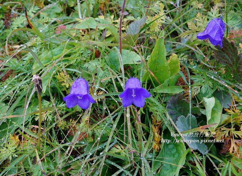 山區野花1