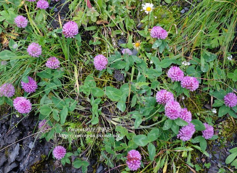 山區野花4
