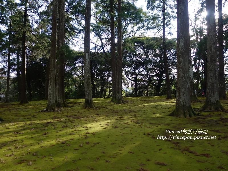 飫肥城杉林