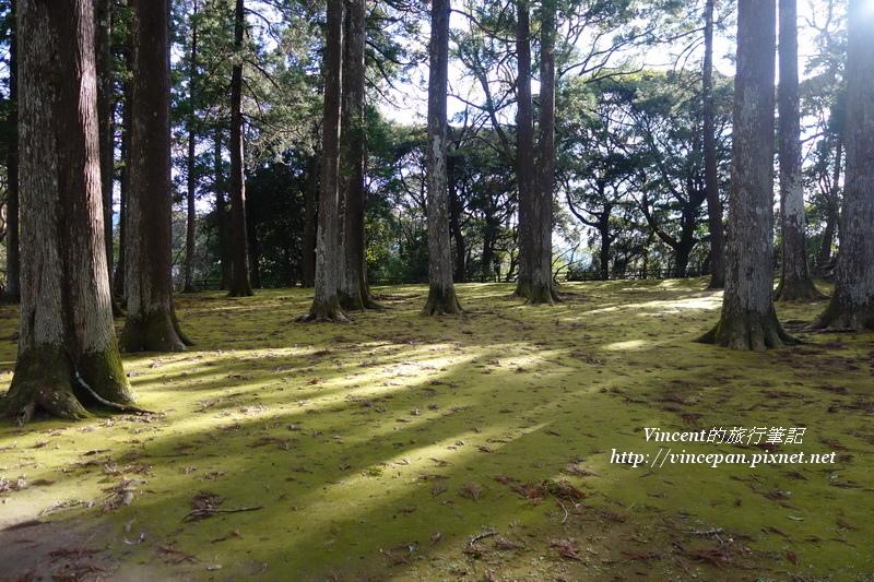 飫肥杉林3