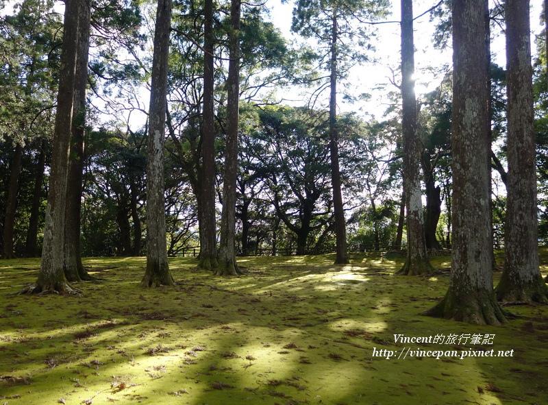 飫肥杉林4