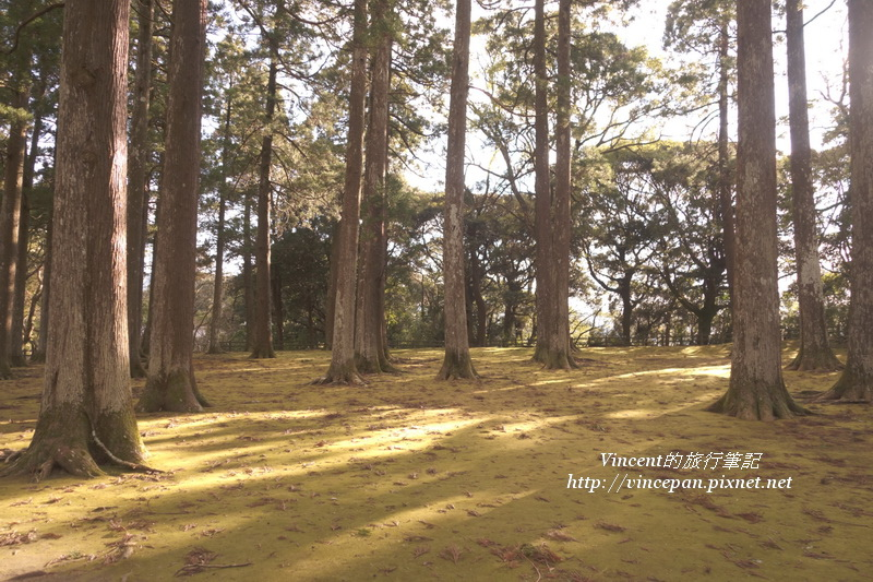 飫肥杉林 復古