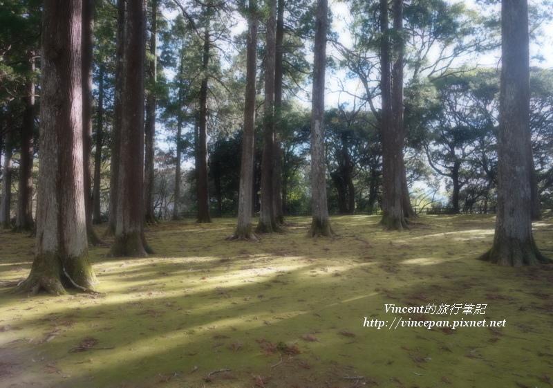 飫肥杉林 朦朧