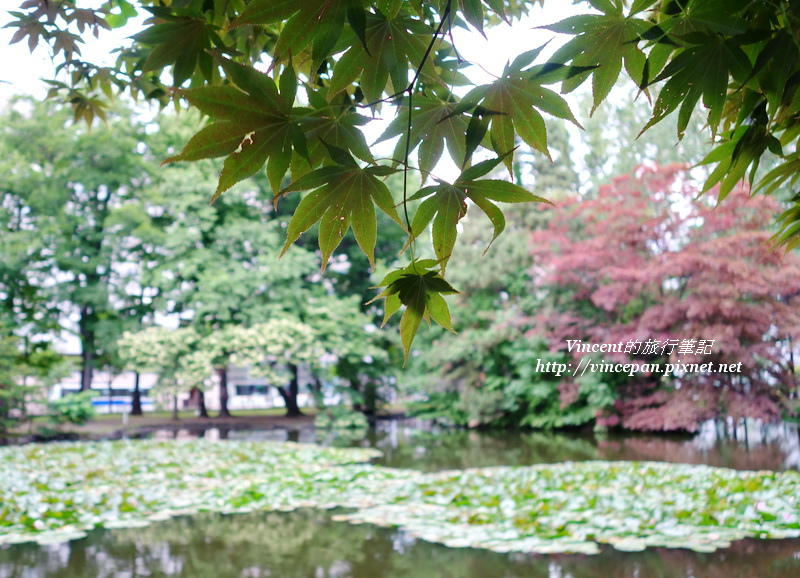 水池 楓葉