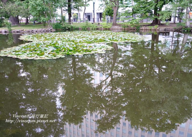 水池的蓮葉