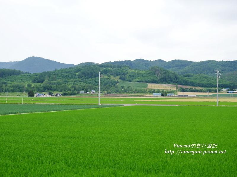 綠油油的稻田