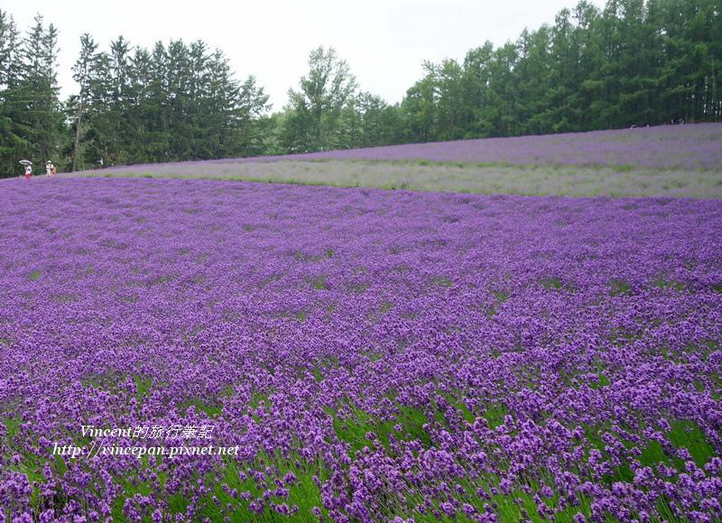 紫色漸層2
