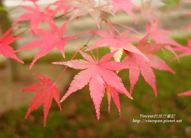 智積院 楓葉