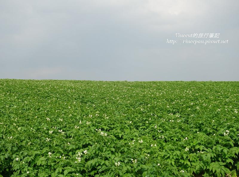 馬鈴薯花田2