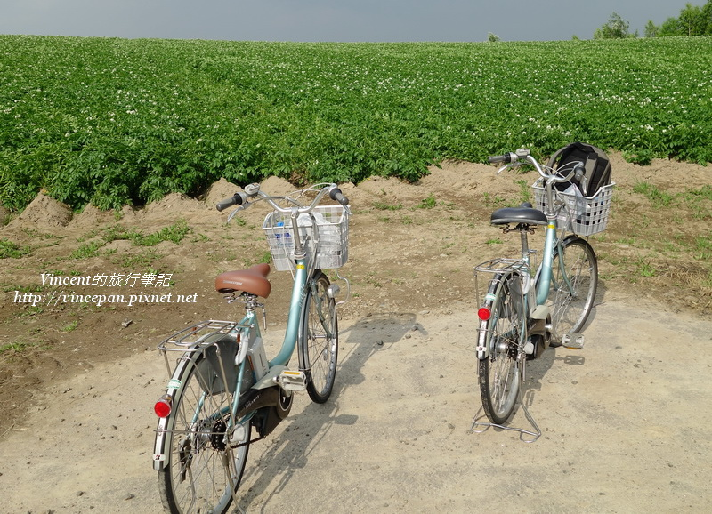 馬鈴薯花田 單車