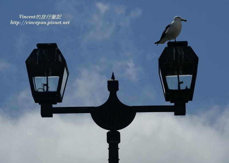 海鷗 燈桿