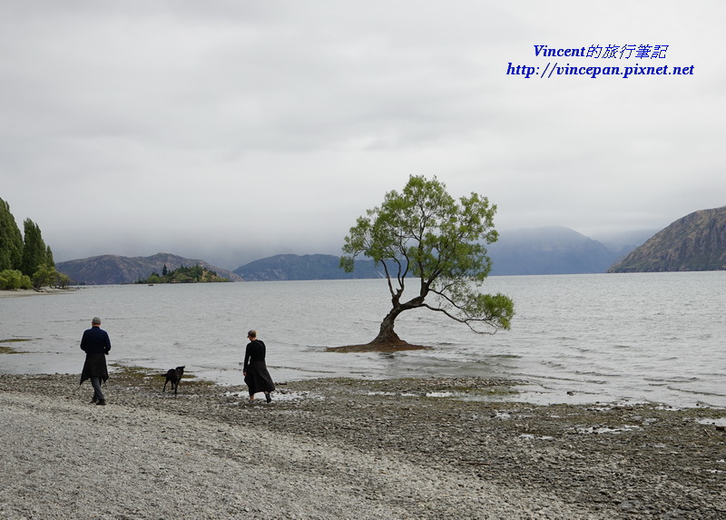 Lone Tree of Lake Wanaka