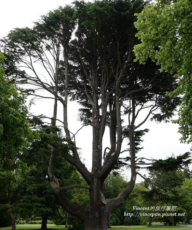 植物園大樹