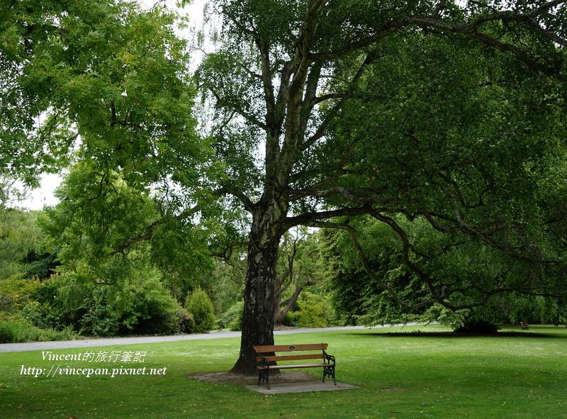 樹下的長椅