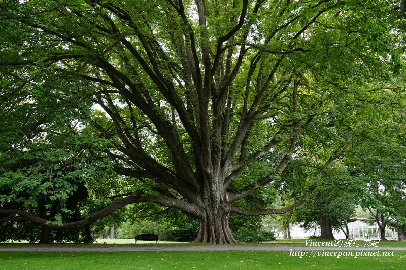 Botanic Garden tree