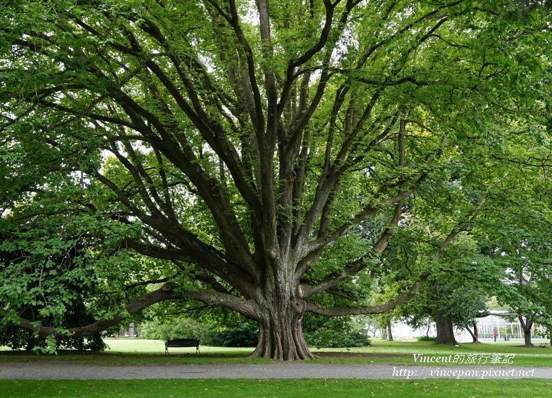 Botanic Garden big tree