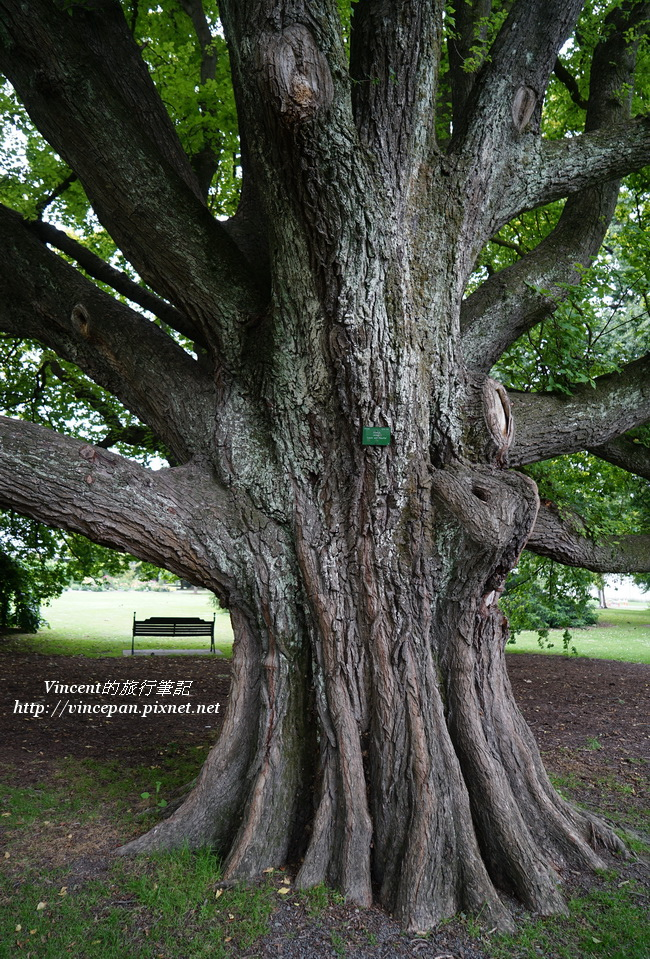 Botanic Garden tree 1
