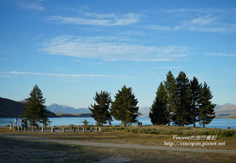 堤卡波湖邊 樹