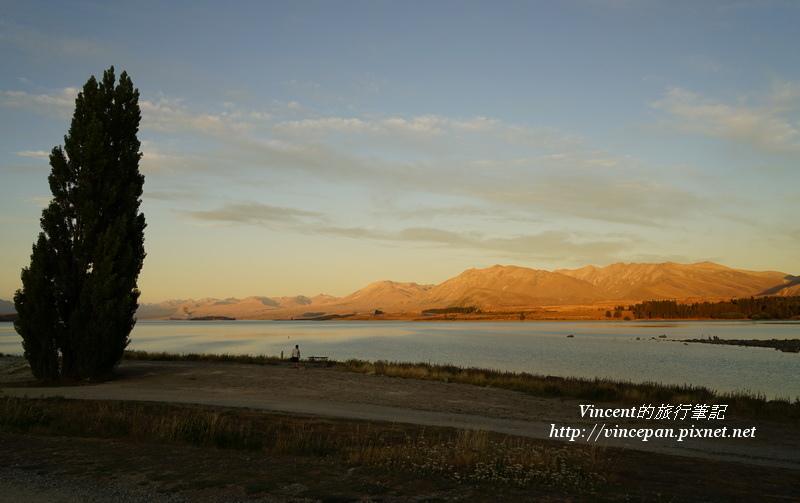 堤卡波湖夕陽 樹