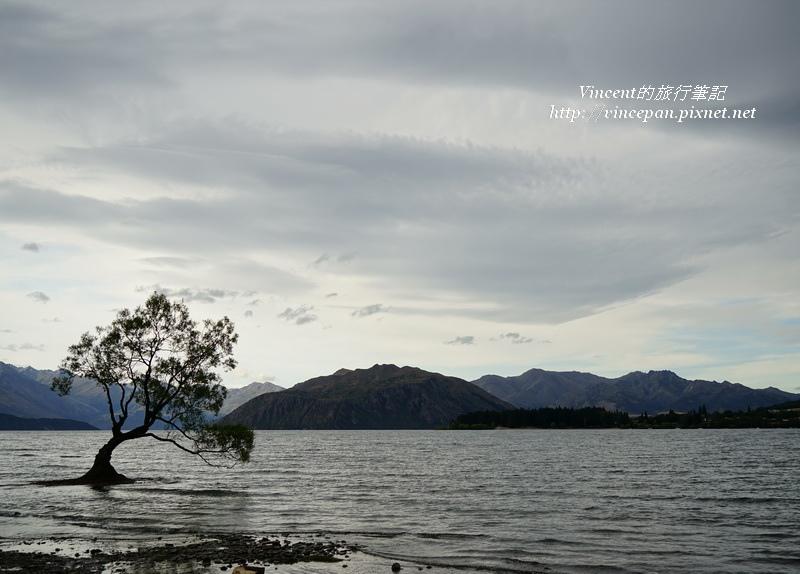 Lone Tree of Lake Wanaka 2