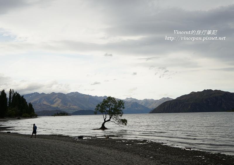 Lone Tree of Lake Wanaka 3
