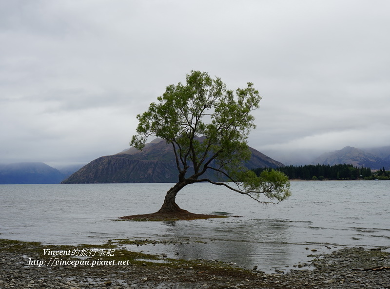 Lone Tree of Lake Wanaka 4