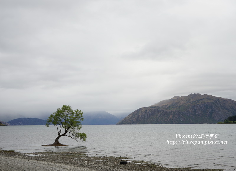 Lone Tree of Lake Wanaka morning
