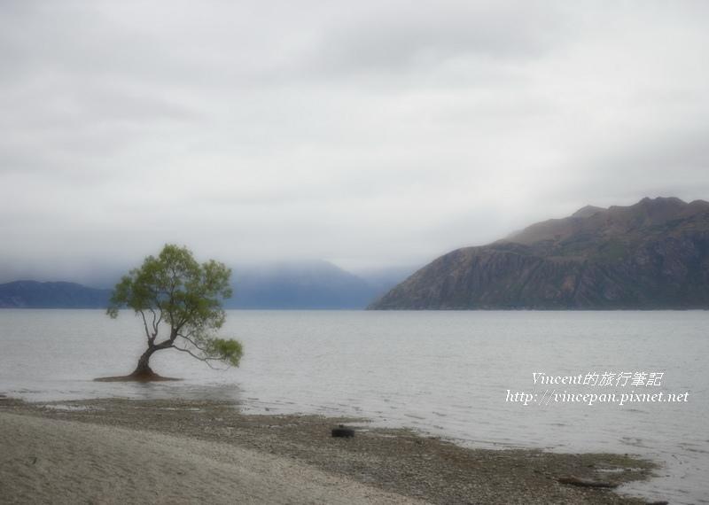 Lone Tree of Lake Wanaka morning2