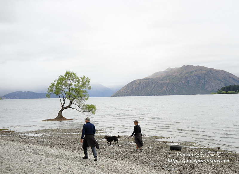 Lone Tree of Lake Wanaka 人與dog