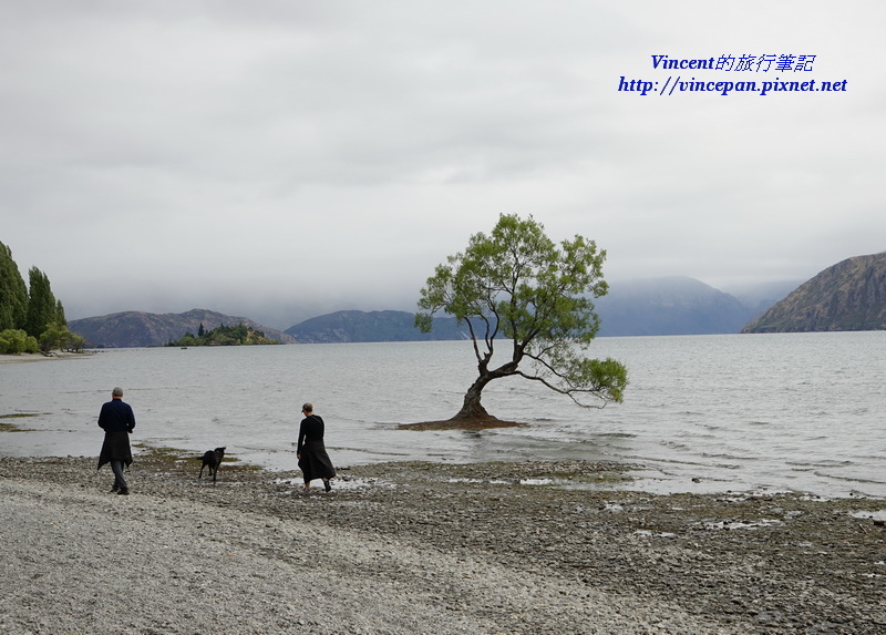 Lone Tree of Lake Wanaka dog