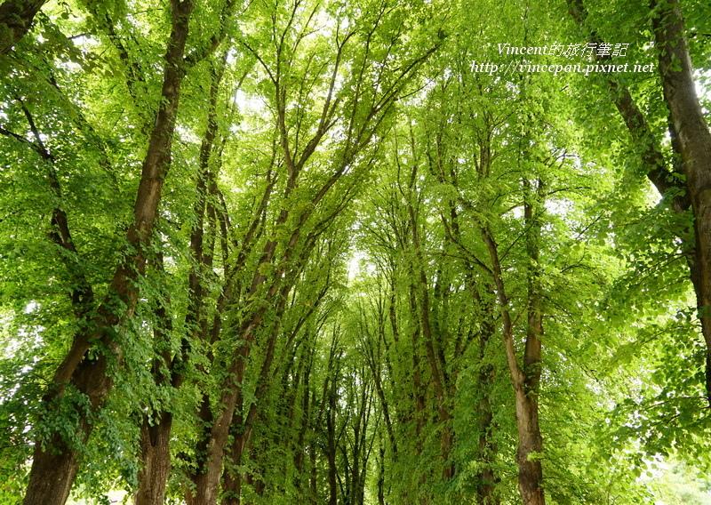 Wanaka整排大樹
