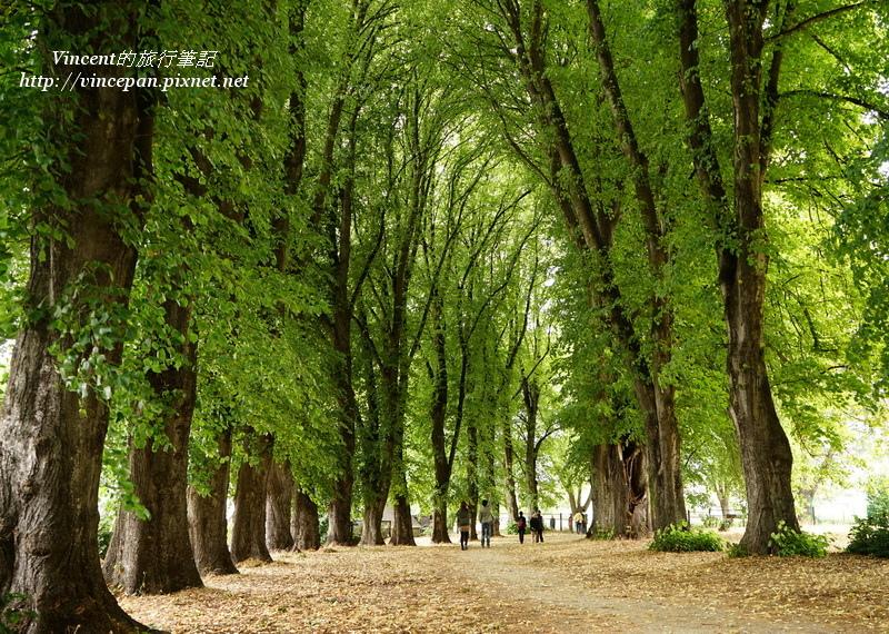Wanaka綠色隧道 散步