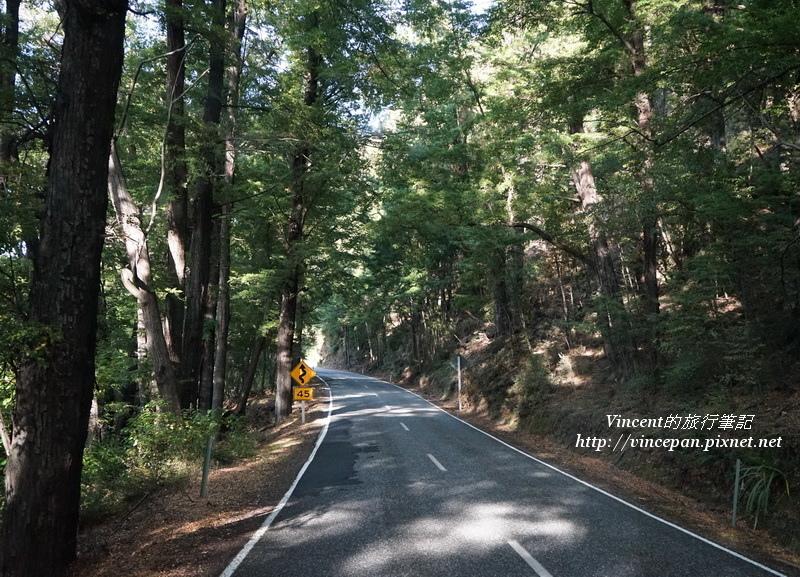 公路上樹林