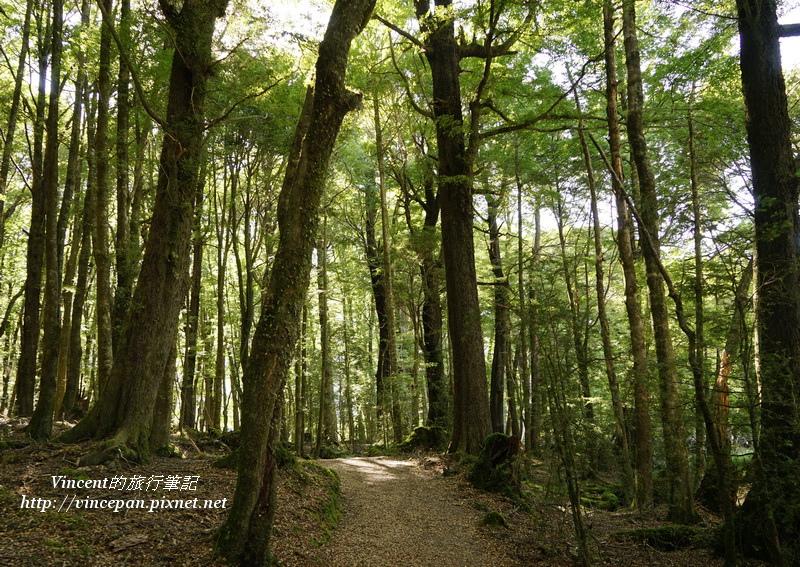 魔戒森林1