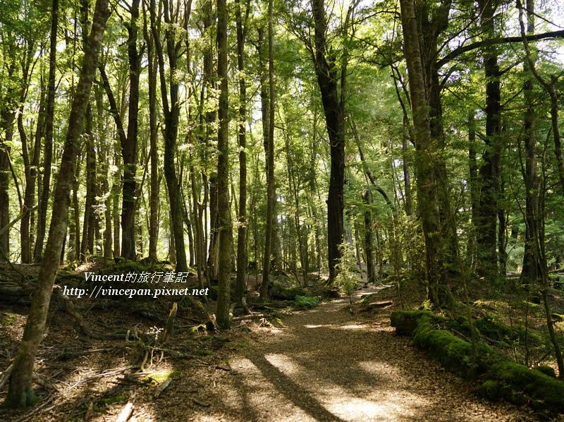 魔戒森林2
