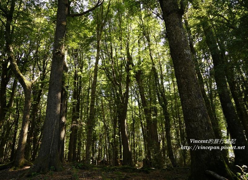 魔戒森林3