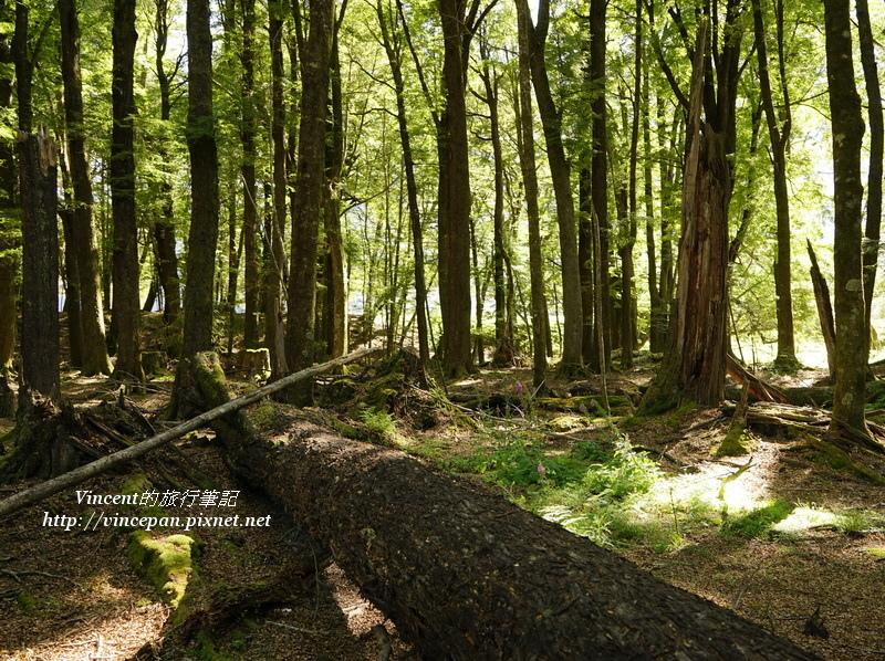 魔戒森林 樹幹