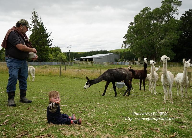 農場阿公與孫子