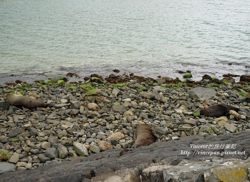 昏睡的海獅